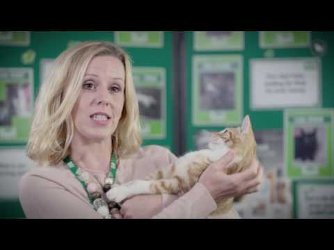 Save a Bob or Two - MedicAnimal link up with Wood Green and discuss A Street Cat Named Bob