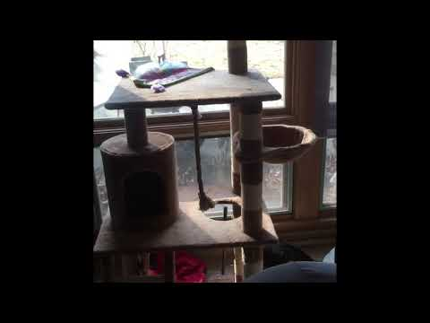 FUNNY CAT COMPILATION~