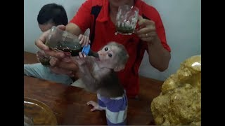 Baby Monkey Doo / Pennywort Juice - Funny Animals
