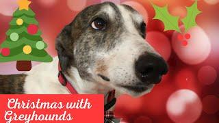 Christmas with Greyhounds