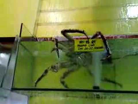 Giant Alaskan King Crab Youtube