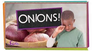 Why Do Onions Make Me Cry?