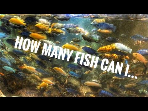 How Many Fish Can I...?
