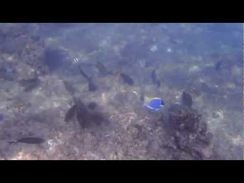 Snorkelling on Aride Island