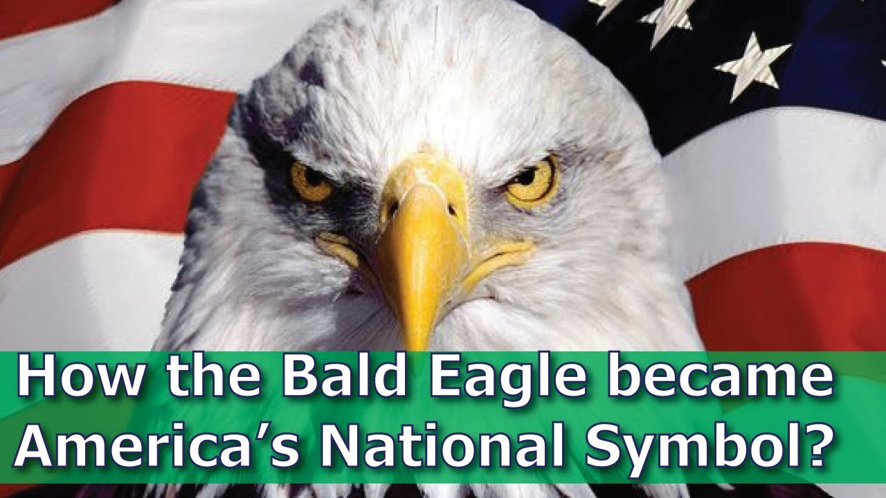 How The Bald Eagle Became Americas National Symbol Youtube