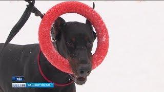 Уфимцы жалуются на нехватку площадок для выгула собак