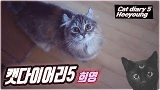 캣다이어리 5 우리 집 막내 고양이 희영! Cat Diary 5 - Introducing Heeyoung