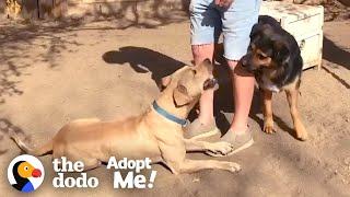 Stray Dog Refuses to be Caught — Until his Friend Shows Up | The Dodo Adopt Me!