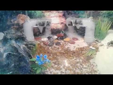 How To Care For Fiddler Crabs And Tank Video With Spongebob Bikini Bottom