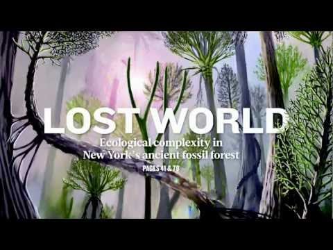 World's Oldest Fossilized Forest Unearthed In NY