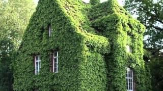 Город зеленого цвета