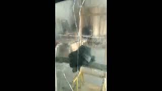 Стекло лобовое Iveco Abrador изготовление и установка(На видео видно старое стекло и проем автобуса Ивеко Абрадор Компании VDglass, является украинским производит..., 2017-02-21T14:28:49.000Z)