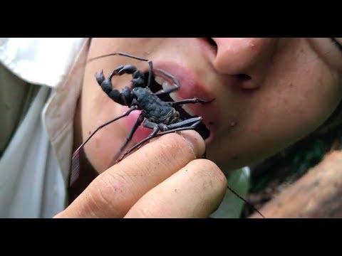 【衝撃】お尻から酢を出す虫を生で食べたら口が溶けた 熱帯雨林で遭難#3