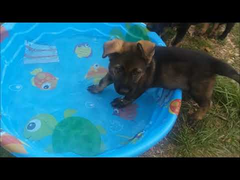 Farewell Puppies (video)