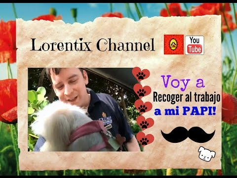 vlog-recogiendo-a-papa-de-su-trabajo,-coton-de-tulear-i-lorentix