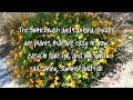 Arizona Desert Plants from Pristine Landscaping AZ