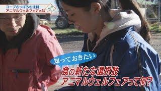 「アニマルウェルフェア」って何?生産者・消費者にとってメリットは?課題は? #けいざいナビ #テレビ北海道 http://www.tv-hokkaido.co.jp/news/kei......