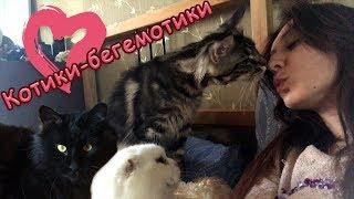Куняша какаша, Миса выбражуля и Пусси котик урчалка ;)