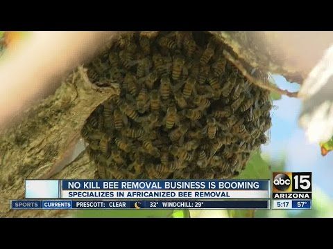 No-kill bee removal business is booming