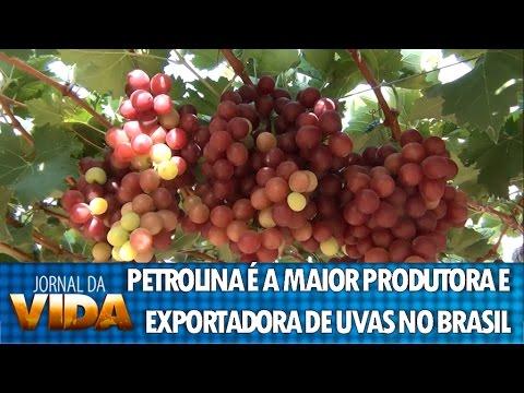 Petrolina é considerada a maior produtora e exportadora de uvas do Brasil - REDE VIDA