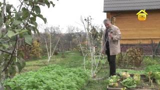 Обрезка и формирование плодовых деревьев // FORUMHOUSE(Обрезку деревьев можно и нужно делать всегда, в любое время года». Так считает активный форумчанин и опытн..., 2012-11-06T07:59:12.000Z)