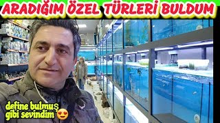 PET SHOP TROPICAL FISHES, aquarim fish