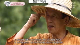 작두콩 최초재배, 헛개나무 최초재배 농장_황금약초농장