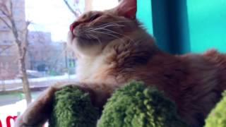 В гостях в «Kotomania» Cats Relax Club