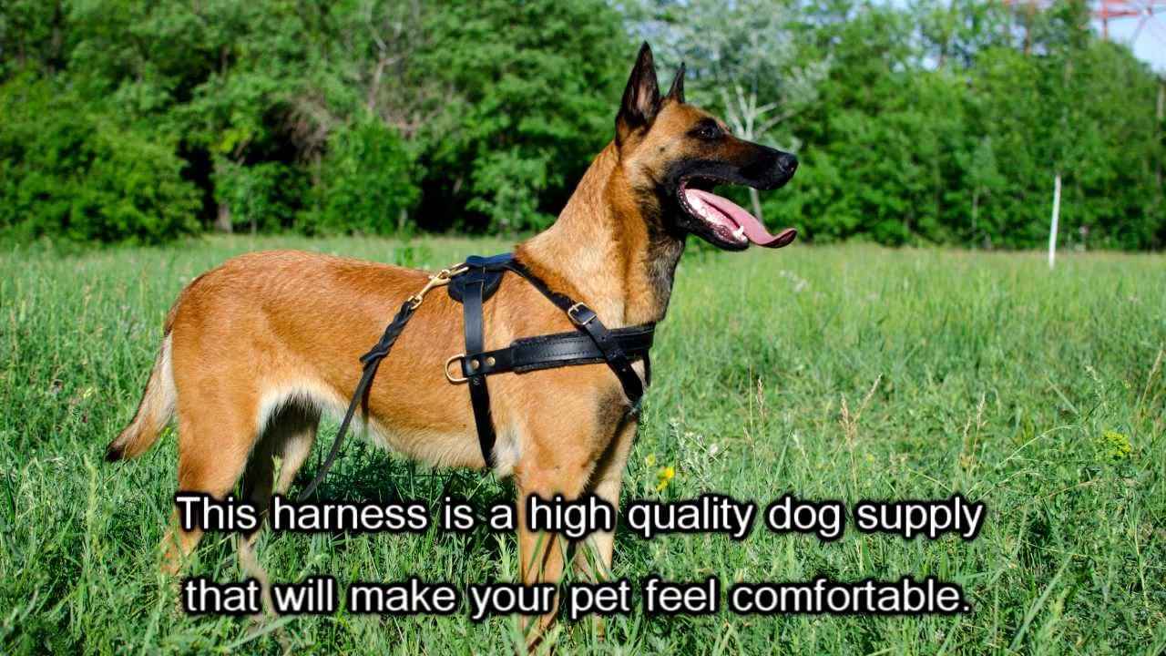 get supplies dog lead cheap guides find comforter adjustable shopping harness leash on quotations comfortable deals pet