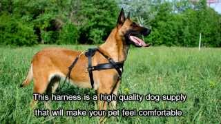 Professional Training Dog Harness For Large Dog Breeds