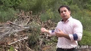 Projeto do vereador Ricardo prevê aproveitamento de poda de árvores para fazer adubo