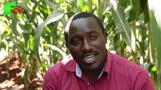Cereal Growers Association (CGA) input to Kenyan farmers.