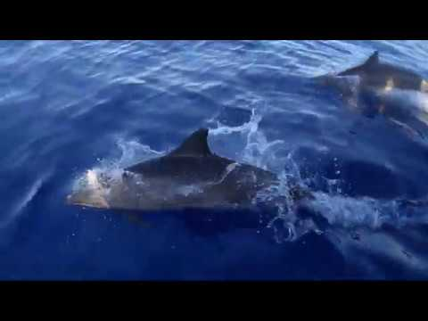 Journée mondiale de l'océan 2020