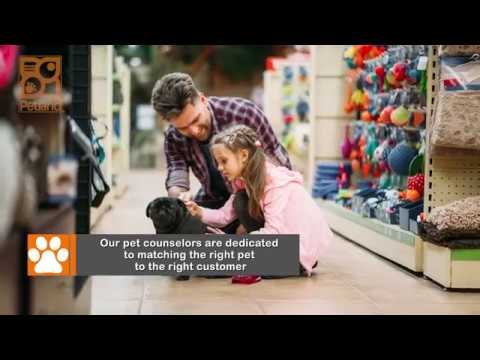 everything-puppies---why-choose-petland?-(2019)