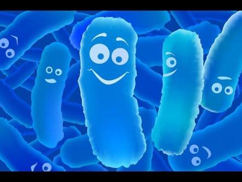 Лактобактерии кишечника и состояние здоровья. Акира Кавашима.