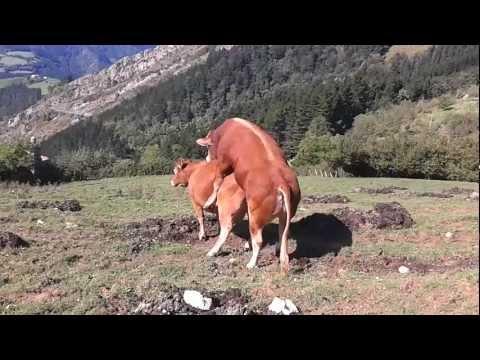 VIDEO XXX DE GARDON Y ASKEA