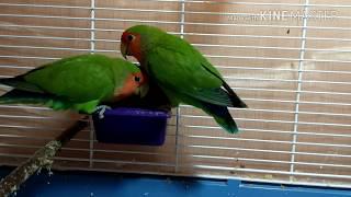 Приколы с попугаями №1