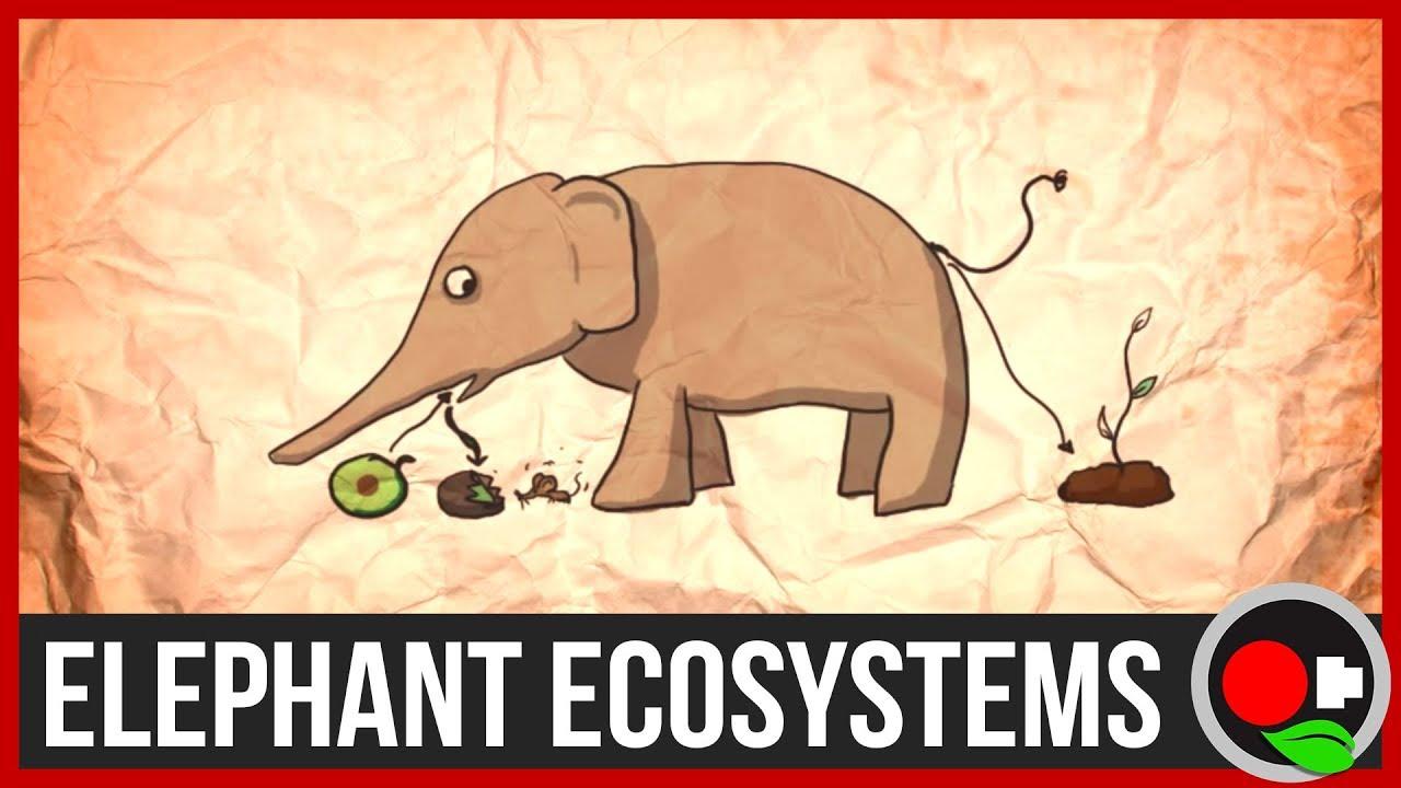 why protect large wild animals like elephants   youtube why protect large wild animals like elephants