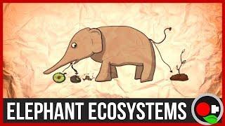 Why Protect Large Wild Animals.. like Elephants?