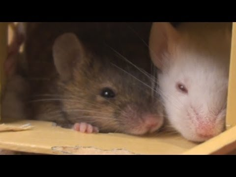 Cutest Little Mice in the World - YouTube