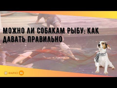 Вопрос: Можно ли собакам есть рыбу?