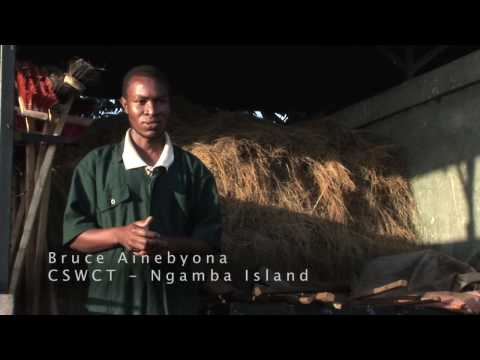 Chimpanzee Sanctuary Wildlife Conservation Trust: Ngamba Isl