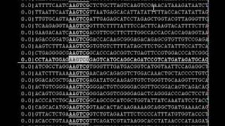 Interactive Human Genome Search