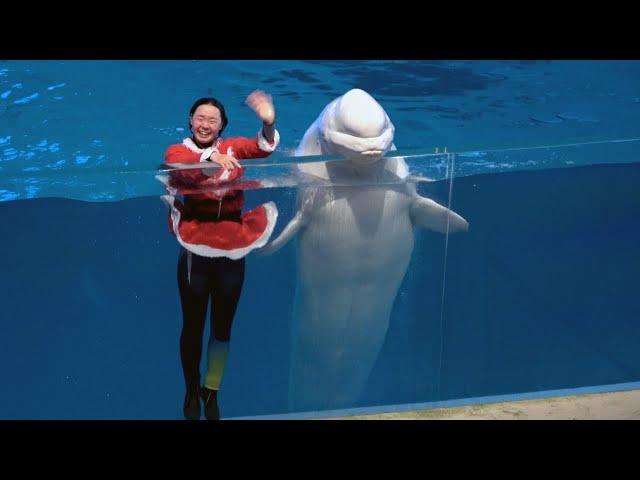 Christmas Version 2 -  Yokohama Hakkeijima Sea Paradise Animal Show 【4K】