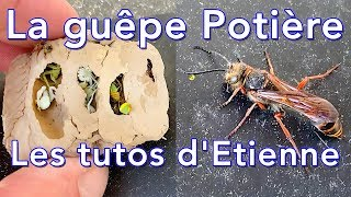 The Potiere Wasp - Etienne's Tutos # 5