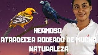 Gambar cover HERMOSO CIELO DE BELLOS COLORES  | ATARDECER RODEADO DE BELLA NATURALEZA