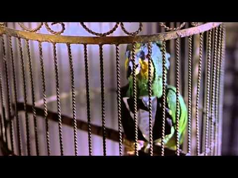 Scary Movie 2 comady Hindi