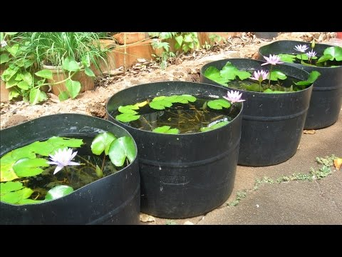 Tub setups for raising guppies from basic water lily tubs for Pond water filtration systems home
