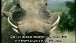 Про мультфильм Король Лев (The Lion King) (3)