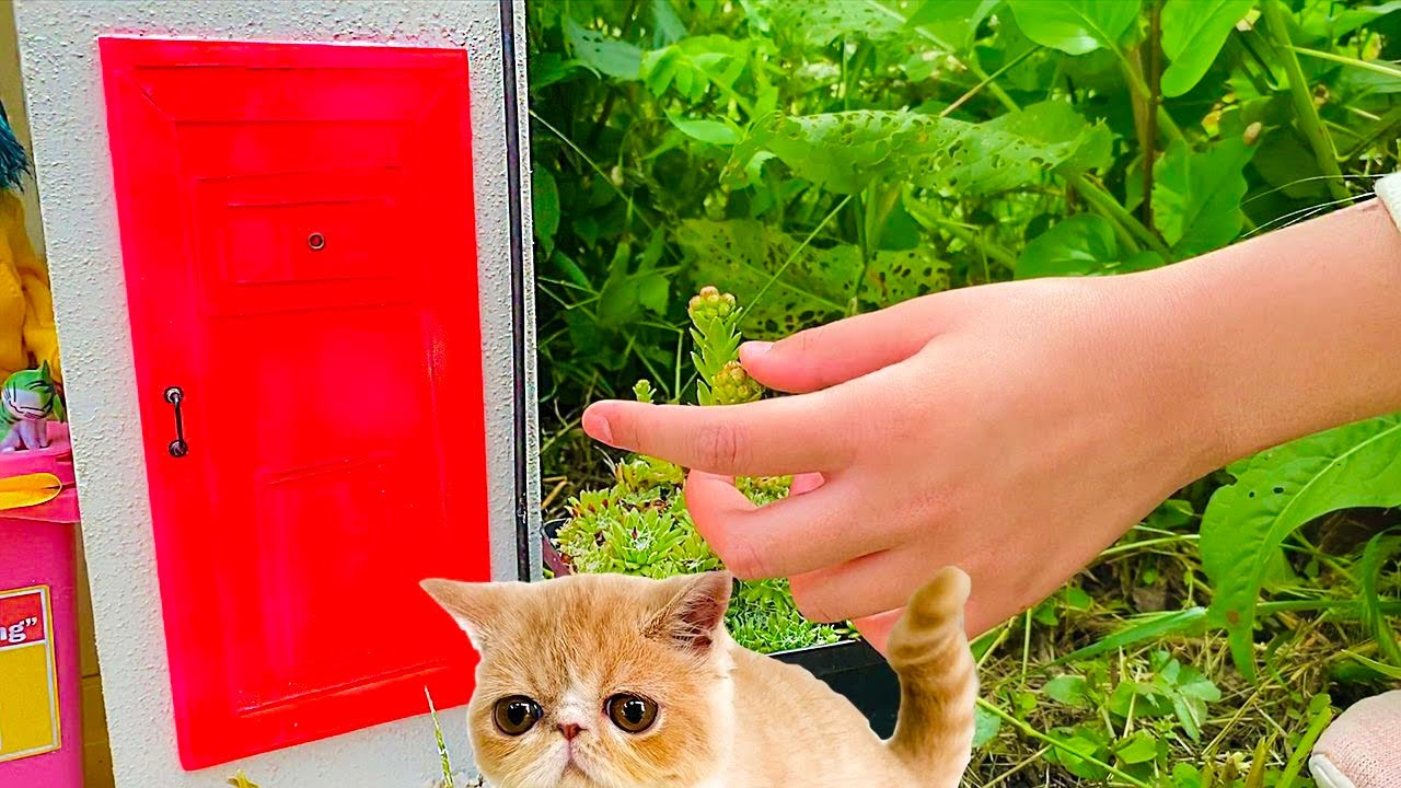 The Smallest KITTEN in the world and a NEW Amazing Kitten's house. How to make House for Cats